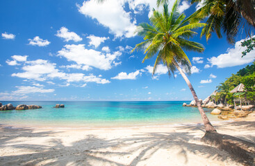 Wall Mural - tropical beach with cocnut palm tree