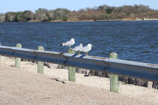 seagulls on the seawall, bird, seagull, sea, gull, water, nature, birds, animal, beach, ocean, sky, wildlife, fly, white, seagulls, blue, summer, beak, coast, swan, sand, flight, wing, flying, wings