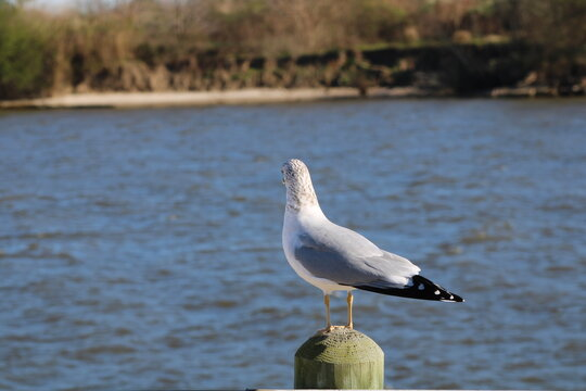 seagull on seawall, bird, seagull, gull, sea, water, animal, nature, ocean, beach, wildlife, birds, white, blue, wild, shore, feather, beak, sand, standing, seagulls, coast, sea gull, lake, fly, waves