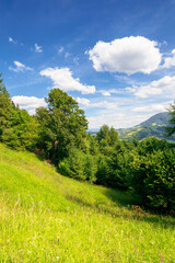 summer mountain landscape. trees on the green grassy hill. puffy clouds on the blue sky. idyllic scenery. view in to the distant valley on a sunny day