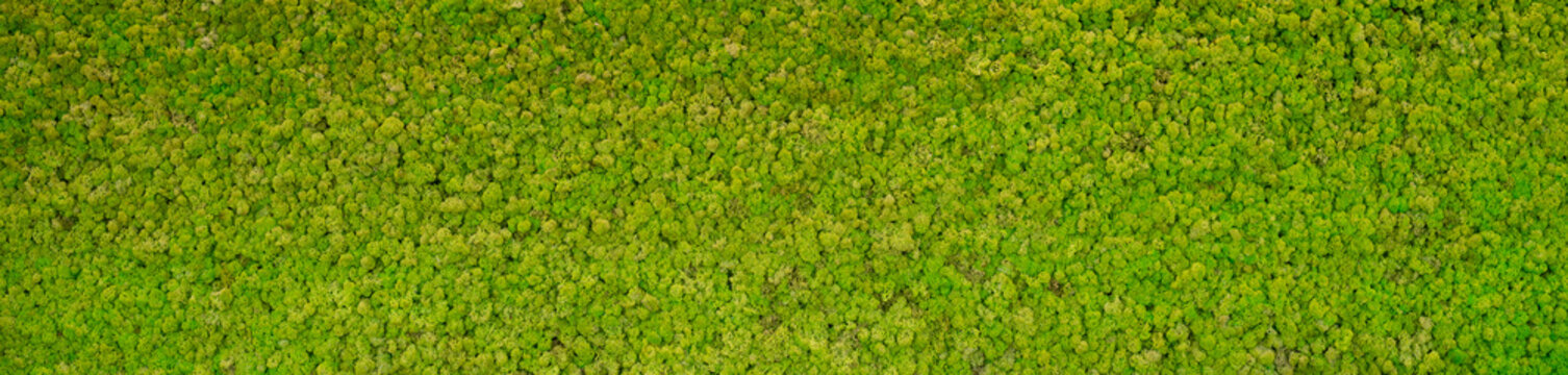 green moss background texture Wallpaper