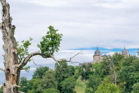 Sababurg im Reinhardswald in Nordhessen