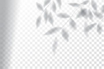 Shadow, overlay effects mock up, window frame and leaf of plants, natural light, vector illustration.