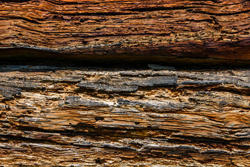 Texture of the logs damaged by wood pests. Wooden pattern for background