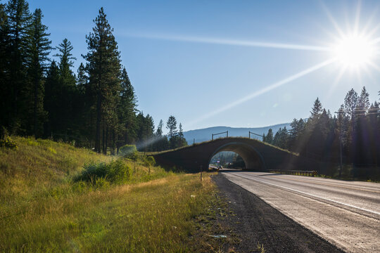 Wildlife Crossing Structures in Use