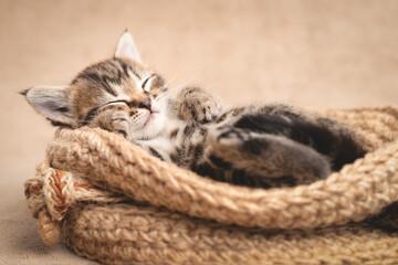 Tabby kitten cute sleeping in a wicker basket