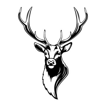 Deer head. Reindeer head isolated vector illustration. Wild animal. Hunting logo.