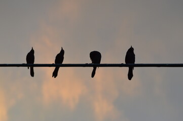 Low Angle View Of Silhouette Birds Perching On Pole Against Sky