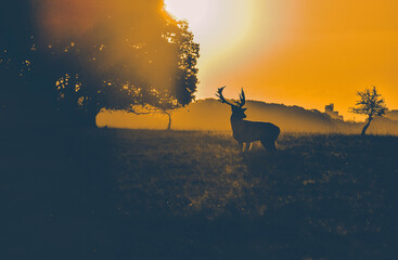 Poster Deer Silhouette Deer On Field Against Sky During Sunset