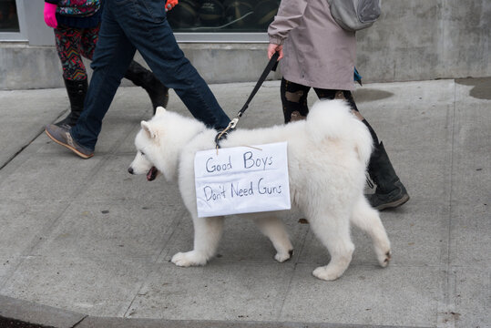 March For Our Lives Protest Rally Held World Wide  Fluffy White Dog Marching With A Protest Sign.