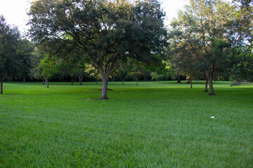Fototapeta Park in the Morning