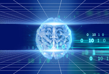 Wall Mural - 3d rendering of human  brain on programming language background