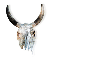 Tuinposter Aquarel schedel The skull of a cow, a buffalo isolated on a white background.