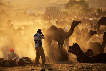 A photographer shoots photos of Camel trade fair at Pushkar fair. Traders and herders come with their camels from all over Rajasthan to take part in this annual affair