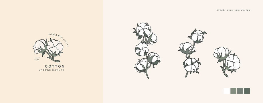 Vector illustration cotton branch - vintage engraved style. Logo composition in retro botanical style.