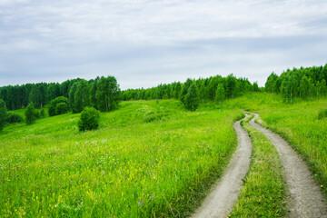 Road through green summer field. Summer landscape.