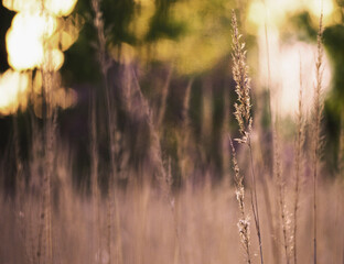 spring grass in a meadow with shallow depth of field