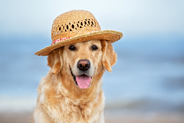 happy golden retriever dog in a straw hat portrait on the beach