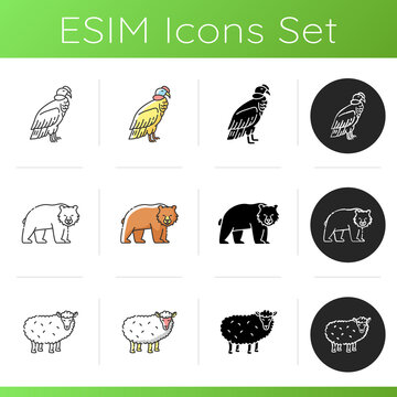 Animal species icons set. Linear, black and RGB color styles. Brown bear, common sheep and condor. Mammals and bird. Diverse wildlife, exotic and ordinary fauna. Isolated vector illustrations