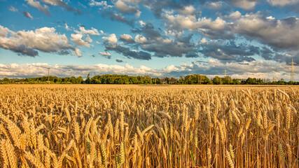 Dramatische Landschaft - Ein Sommertag auf dem Feld