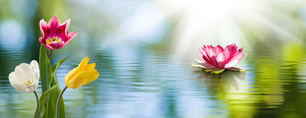 Garden Poster Lotus flower lotus flower in the water and other beautiful flowers