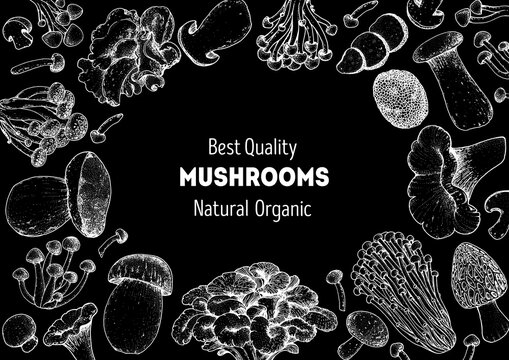 Edible mushrooms hand drawn sketch. Vector illustrations collection. Hand drawn food. Vintage mushrooms sketch. Organic food. Forest mushrooms. Vintage mushrooms background. Healthy food illustration.