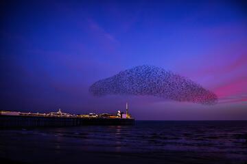 Fotomurales - A Murmuration Of Starlings At Sunset Over Brighton Pier