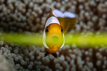 Sea Gras Photobombs A Pictures Of A Clownfish