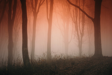 forest fog landscape in sunset light