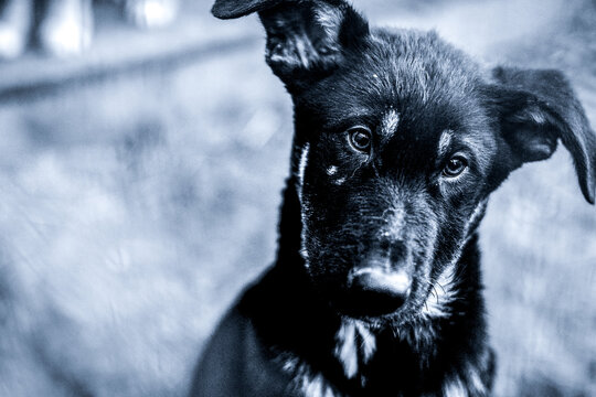 black and white photo of an abandoned dog