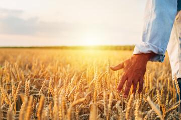 farmer outdoor walking field of wheat