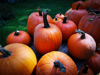 Aluminium Prints Autumn Close-up Of Pumpkins On Field During Autumn