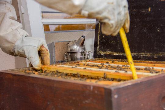 the beekeeper, always looking for his queen