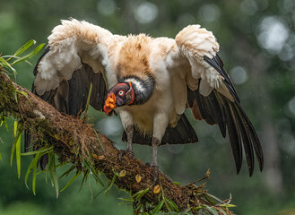 King Vulture Fotomurales