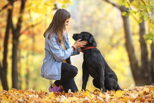 girl with her dog labrador in autumn sunny park