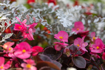 Close-up of a beautiful flower bed with white, red and pink flowers