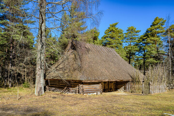Old wooden barn with a thatched roof surrounded by coniferous forest at sunny spring day. Estonia