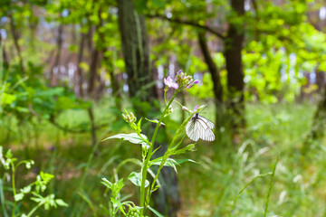 Tranquil Forest Life / Beautiful butterfly on flowering plant at sunny meadow woodland