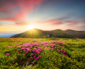 Mountain landscape in summertime during sunse. Blossoming alpine meadows. Field and mountains. Travel and hiking. Landscape - image