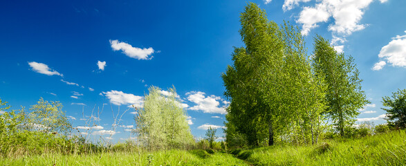 Fototapete - Rural summer landscape. Blue sky with clouds, forest, road through green meadow. Nature landscape wilderness. Countryside outdoors, relaxation weather, space scenic.