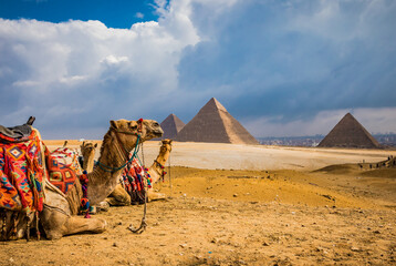 Numerous camels waiting for tourist riders in Giza.