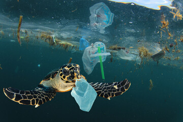 Foto op Plexiglas Schildpad Environmental issue of plastic pollution problem. Sea Turtles can eat plastic bags mistaking them for jellyfish