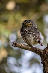 Obraz Close-up Of Owl Perching On Branch - fototapety do salonu