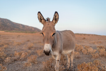 Portrait Of A Donkey Standing On Land At Asinara Island