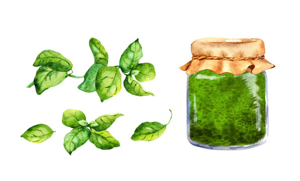 Set for homemade Basil Pesto in glass jar. Watercolor food collection