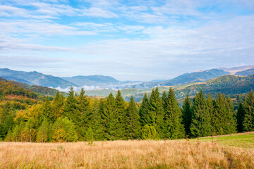 autumn morning in the foggy valley. open view with forest on the meadow. stunning nature scenery of carpathian mountains. sunny weather