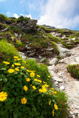 flowers on the rocky path uphill. summer nature scenery. clouds on the sky