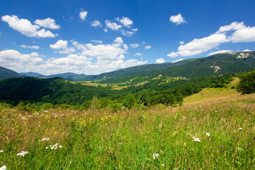 pasture on a sunny day in mountains. wonderful countryside landscape of carpathians. fluffy clouds on the sky