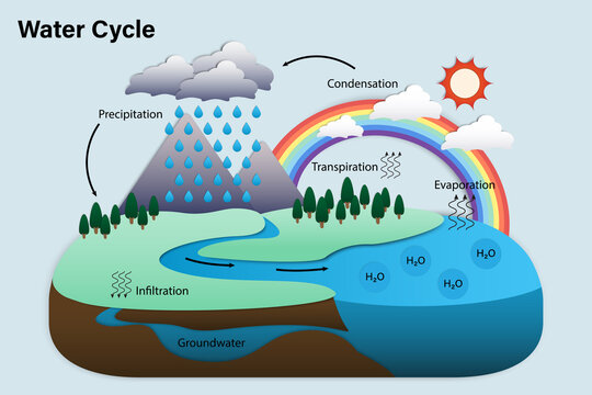859 Best Water Cycle Diagram Images Stock Photos Vectors Adobe Stock