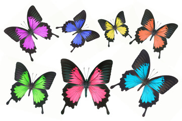 Set of beautiful butterflies isolated on white background